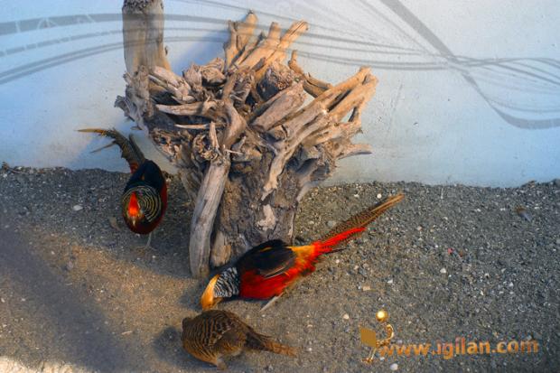 باغ پرندگان آستارا