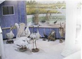 موزه تاریخ طبیعی رشت