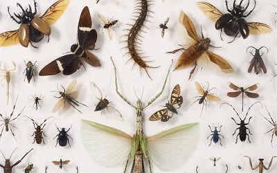 موزه جانور شناسی و حشرات گیلان – راهنمای گردشگری استان گیلان