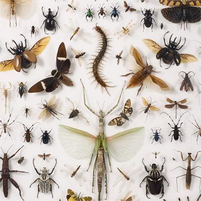موزه جانور شناسی و حشرات