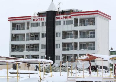 dolphin92Snow1