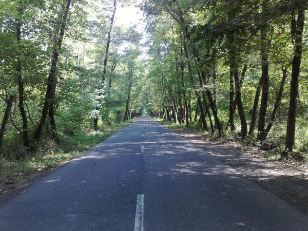 پارک جنگلی صفرا